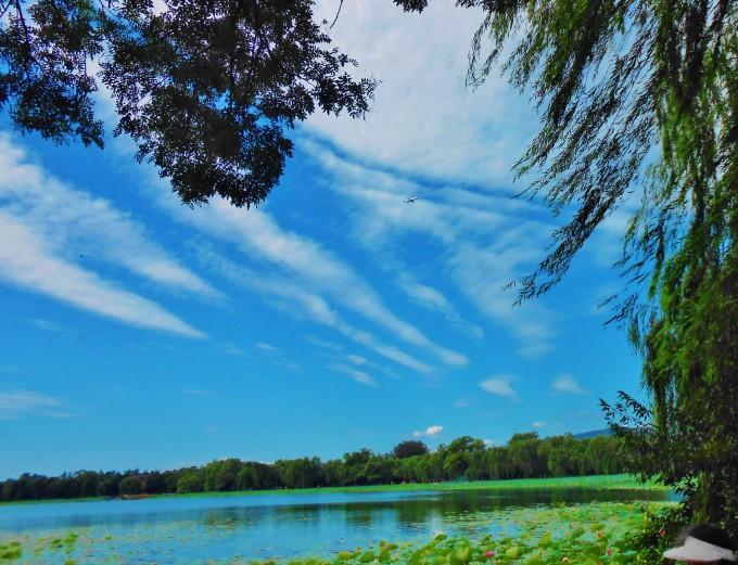 """湖碧波蕩漾,岸邊的垂柳蔥綠,修長的枝葉輕拂水面,迎風飄逸。南湖的荷花開得正旺。翠綠荷田一望無邊,星星點點的荷花點綴其中嬌豔粉紅。遊船畫舫穿梭於濃密荷田之中,好一幅湖中荷花堤邊柳,碧波輕搖蕩綠舟""""的秀美山水畫卷。   漫步到耕織圖景區,靜觀湖光山色。今年的亮點不是滿湖的荷花,不是連綿起伏的西山,卻是游弋在池水中的一對黑天鵝。那高雅的體態,俊美的身影,吸引了不少晨運客停下來觀賞。   由於西堤遠離萬壽山景區,地點偏僻,只能沿湖徒步由南北兩個入口前往。長久以來都是熟悉園內環境的京城人聚集之地,是京城人漫步晨運、"""