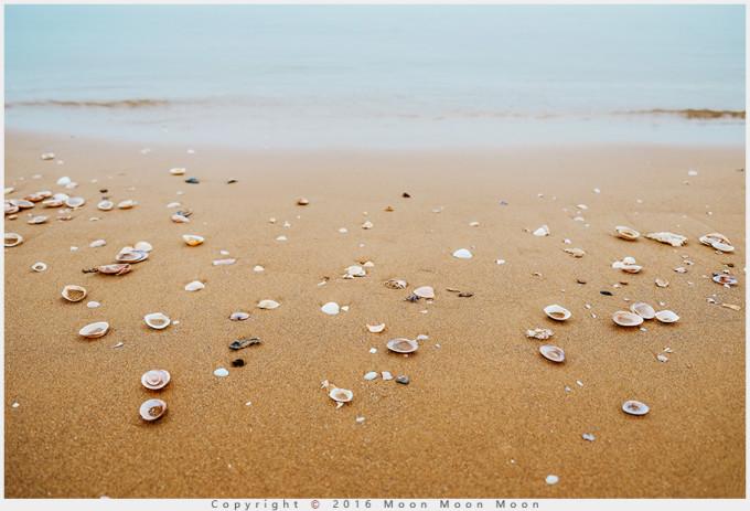 秦皇岛海边贝壳图片