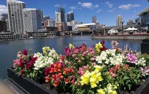 【悉尼图片】放松身心,游走悉尼
