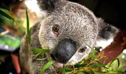 悉尼 斯蒂芬斯港探险一日游(澳大利亚爬行动物公园 观
