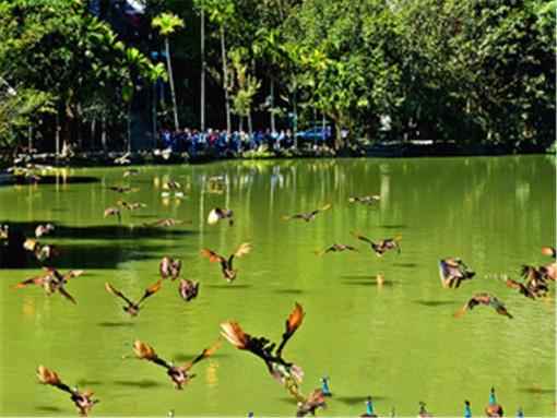【景洪出发】西双版野象谷   原始森林公园   勐仑植物园   傣族园