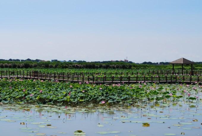 广州的湿地:南沙湿地公园,海珠湖,白云湖