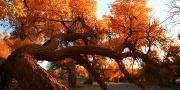 【敦煌出发/西宁出发】 大美西北 额济纳全景6或7日游(秋季盛宴,相约在英雄的天下)