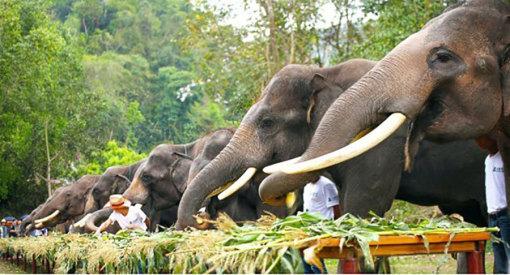 壁纸 大象 动物 510_275